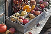 Wooden box with apples (malus), pears (Pyrus), quinces (Cydonia)