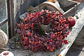 Autumn wreath in different shades of red, Quercus leaves