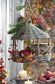 Basket bird feeder, filled with flower heads of Helianthus