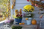 Herbstbalkon mit Chrysanthemum (Herbstchrysantheme) Stämmchen