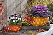 Decorative carved pumpkins as planters for viola cornuta