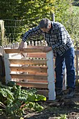 Man assembling compost container, Swiss chard (Beta vulgaris)