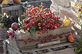 Wooden box filled with Rose, Ilex, Skimmia
