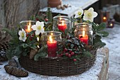 Planting ring made of willow as Advent wreath with Helleborus, Gaultheria