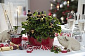 New Year's Eve decoration, Oxalis deppei (lucky clover) with chimney sweeps