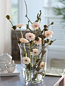 Gerbera Germini 'Cream Cafe' in glass vase with mossy elderberry branches