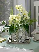 Arrangement with phalaenopsis