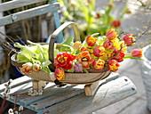 Woodchip basket with freshly cut tulipa and twigs of betula