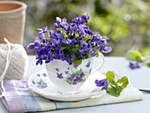 Small bouquet of Viola odorata in cup with violet decor