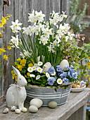 Zinc Bowl with Narcissus 'White Tete', Tiarella 'Morning Star'