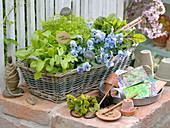 Herb basket and edible flowers in spring
