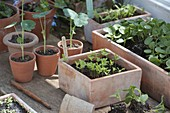 Vegetables and summer flower seedlings in seeding bowl