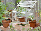 Pots with seedlings of tomatoes, peppers