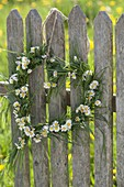 Heart of grasses and Bellis perennis hung on fence