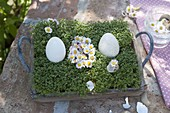 Blossoms of bellis in egg shape accompanied by Easter eggs