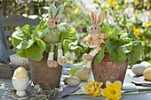 Salad (Lactuca) in clay pots Easterly with fabric easter bunny
