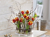 Arrangement of Tulipa, branches of Betula as plug-in aid