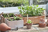 Seedlings and young plant of vegetables and summer flowers in clay boxes