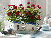 Rose chinensis in cups with lavender decor on zinc tray