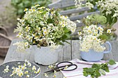 White herbal bouquets with Matricaria chamomilla, Sambucus