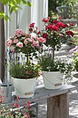 Rosa (lilac stem), Lavender (Lavandula), Achillea ptarmica