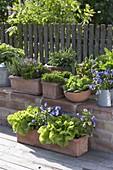 Herb arrangement on brick wall