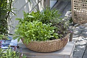 Asia basket with Asian salad Mizuna, Komatsuna 'Green Boy'