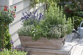 Planting the herb box