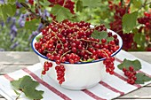 Small bowl of freshly picked redcurrants