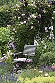Rose 'Kir Royal' and Clematis viticella 'Romantika' in the flowerbed