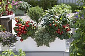 Box with bush tomatoes 'Balkonstar', lemon thyme