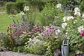 Perennial flowerbed in white-pink-purple gradient