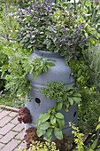 Plastic barrel with holes planted as herb garden