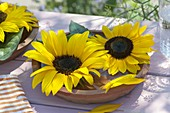 Helianthus flowers in terracotta bowl with water