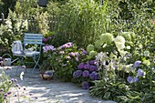 Shadow bed with Hydrangea macrophylla 'Cote d'Azur' 'Endless Summer'