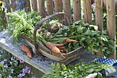 Freshly harvested vegetables in a spanking basket
