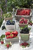 Freshly picked berries, strawberries (Fragaria), blackberries