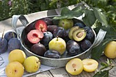 Three plum yellow, blue and dark red plums