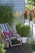 Grass Balconies Miscanthus 'Silver Feather', Imperata cylindrica