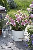 Lilium asiaticum 'Mount Duckling', Carex in enamel pail