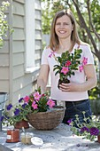 Plant basket with Mandevilla and Verbena