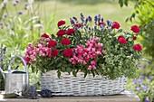 Basket with roses (pot roses), antirrhinum (snapdragons)
