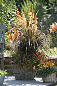 Baskets planted with gladiolus, pennisetum rubrum