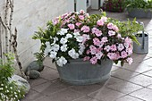 Old zinc tub planted with Impatiens 'New Guinea Orestes'