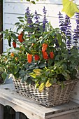 Basket with herbs and peppers, chili (capsicum), sage