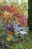 Flowerbed with Rhus typhina in autumn color, Aster