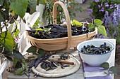 Basket of freshly harvested black beans 'Blauhilde'
