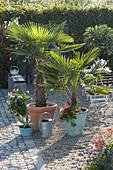 Palm trees on gravel terrace
