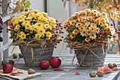 Chrysanthemum Yahou 'Rico' links, 'Faro' rechts (Herbstchrysanthemen)