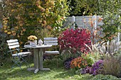 Small seating group at the autumnal bed, Euonymus alatus